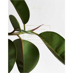 Cozy Publishing Green Home Book
